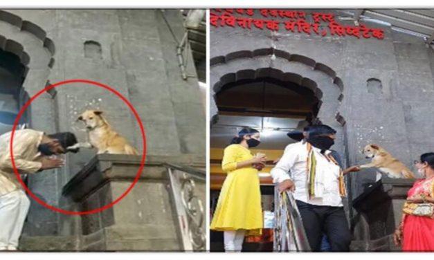 भगवान बनकर ये कुत्ता मंदिर में आने जाने वाले लोगों को देता है आर्शीवाद, जानिए इनके बारे में