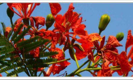 इस फूल का सेवन करने से गठिया और चर्म रोगों, जोड़ों के दर्द जड़ से राहत पाने के लिए यह एक मजबूत देसी इलाज है, 100% असरकारक