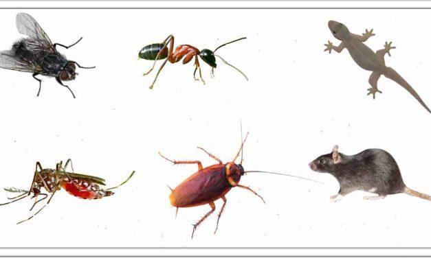 मक्खियों, मच्छरों, चूहों, छिपकलियों, चींटिया, कॉकरोच जैसे कीड़े को इस तरह घर के बाहर रखें
